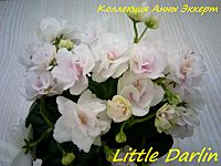 Фиалка Little Darlin (S.Sorano)